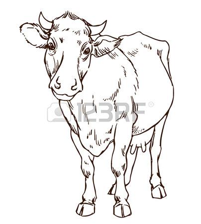 404x450 Hand Drawing Indian Zebu Cow Royalty Free Cliparts, Vectors,