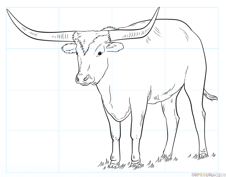 735x575 How To Draw A Longhorn Step By Step Drawing Tutorials