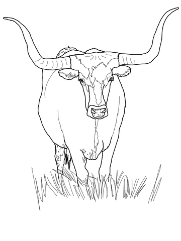 360x480 Texas Longhorn Cattle Coloring Page Free Printable Coloring Pages