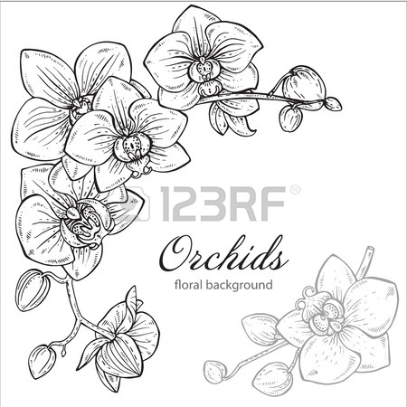 450x450 Orchid Drawing Stock Photos. Royalty Free Business Images