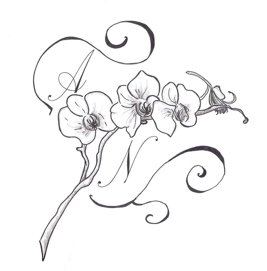 888x900 Gousicteco Orchid Drawing Black And White Images