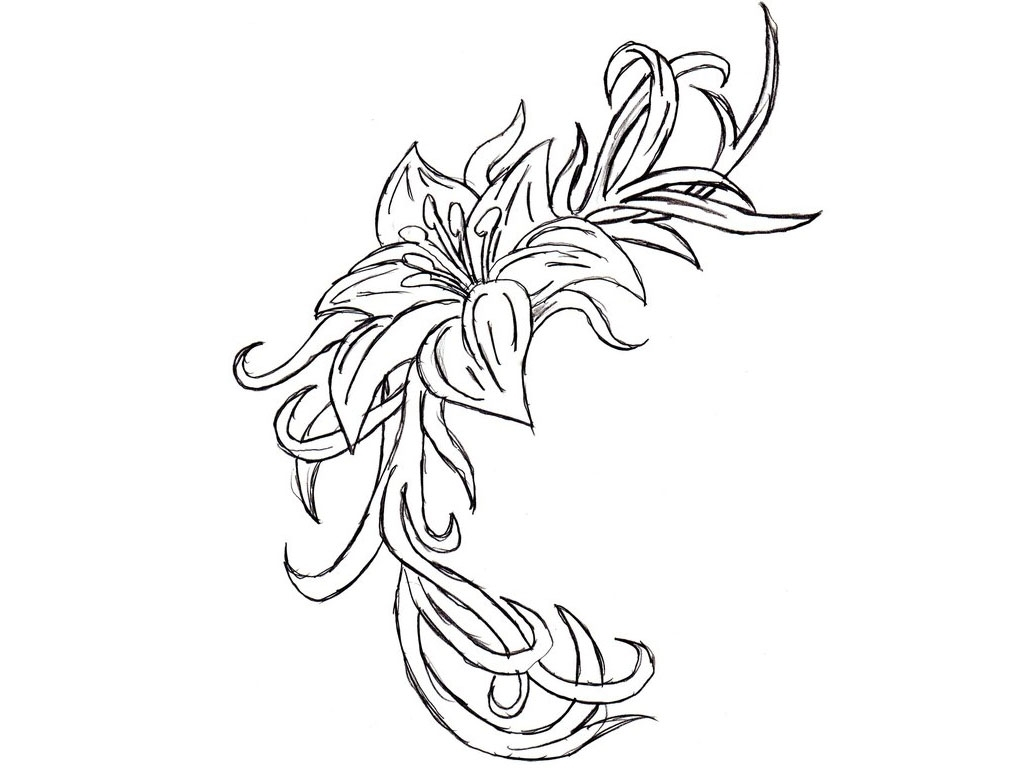 Cattleya Orchid Drawing At Getdrawingscom Free For