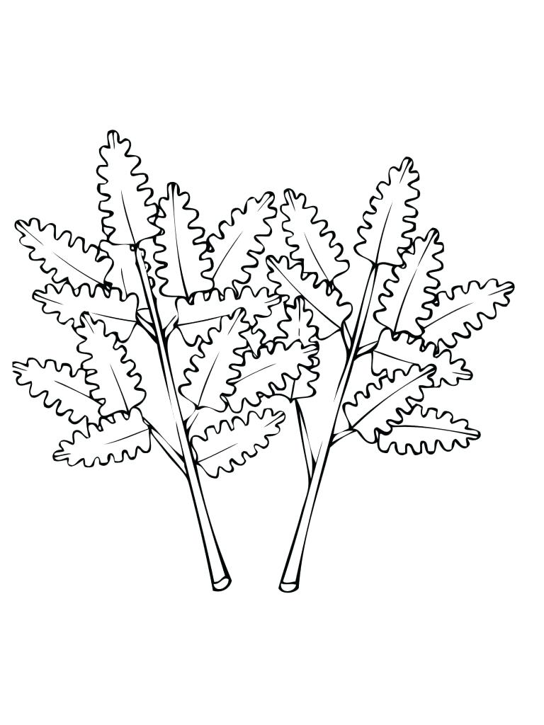 Celery Drawing at GetDrawings.com | Free for personal use Celery ...