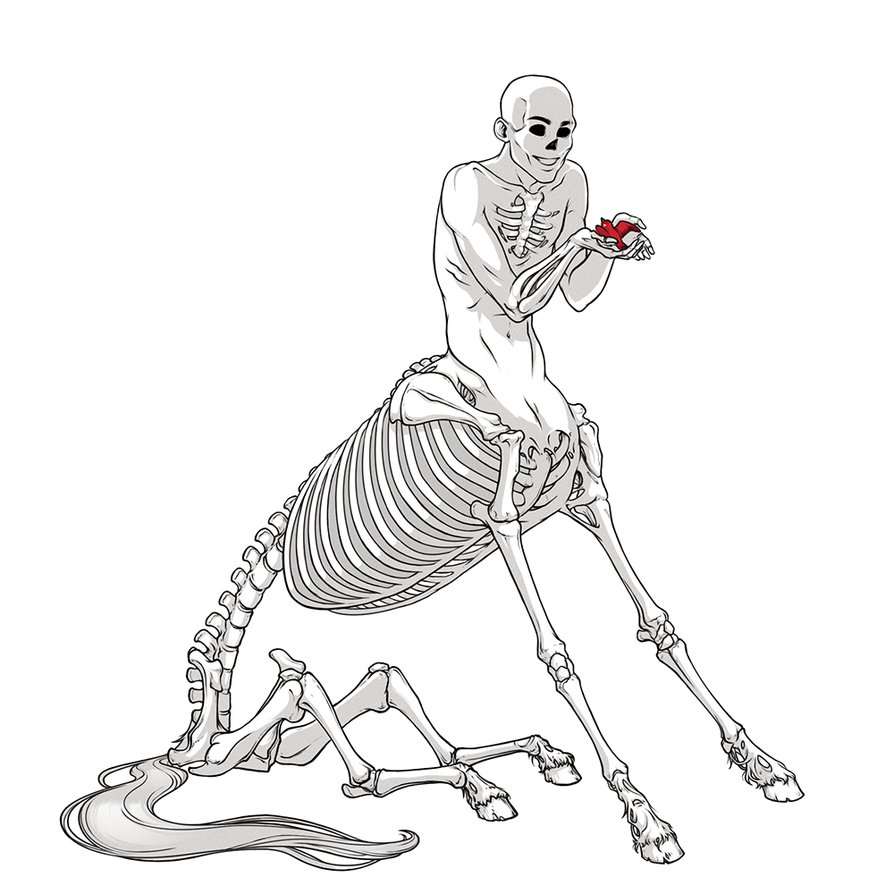 894x894 Pin By Alina N. On Centaursanatomy Centaur And Anatomy