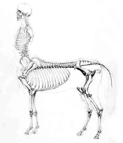 416x485 Centaur Drawing
