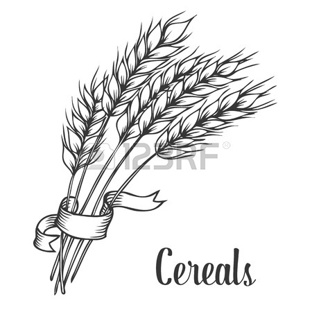 450x450 Wheat Bread Ears Cereal Crop With Ribbon Sketch Decorative Icons