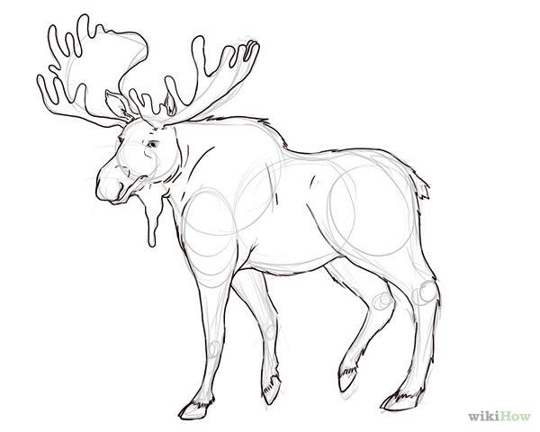 600x480 Draw A Moose