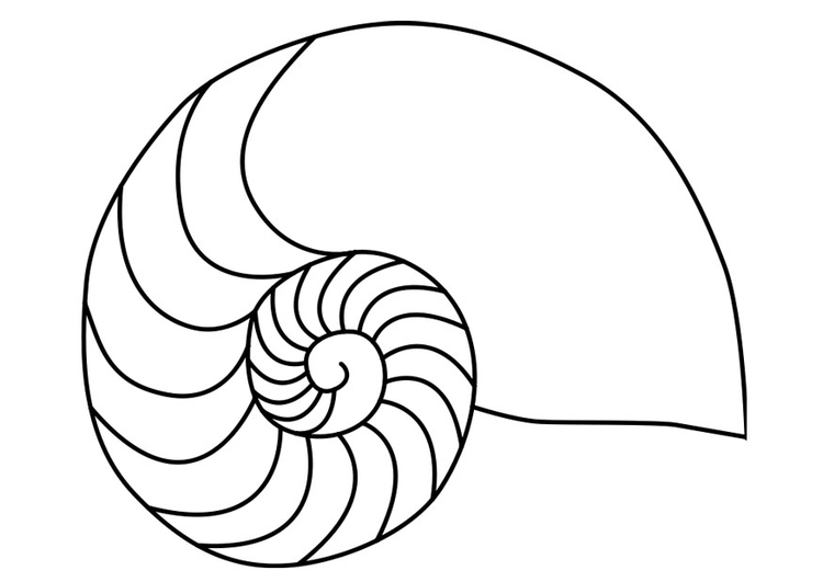 Diagram The Best Free Nautilus Drawing Images Download From 154