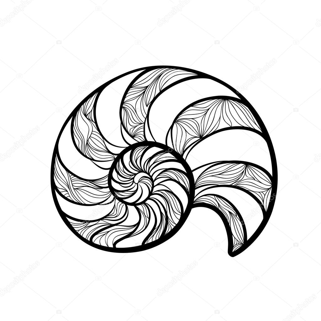 The Best Free Nautilus Drawing Images  Download From 154