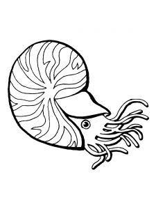 225x300 Nautilus Shell Coloring Page Download