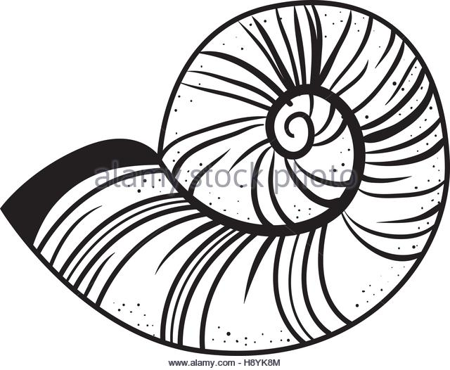 640x526 Nautilus Shell Vector Stock Photos Amp Nautilus Shell Vector Stock