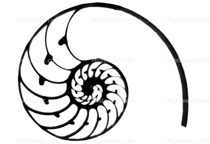 418x286 Cutaway Of A Nautilus Shell Silhouette Life Tattoo Ideas