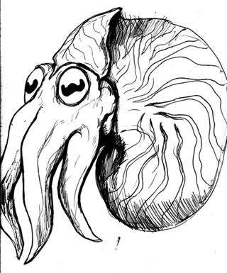 320x385 Nautilus Drawings On Paigeeworld. Pictures Of Nautilus