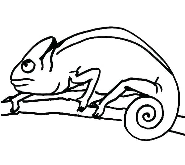 600x534 Mixed Up Chameleon Coloring Page Drawing Chameleon Coloring Pages