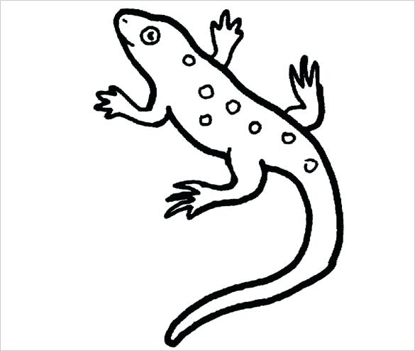 585x494 Reptile Coloring Page Cute Chameleon Chameleon To Color