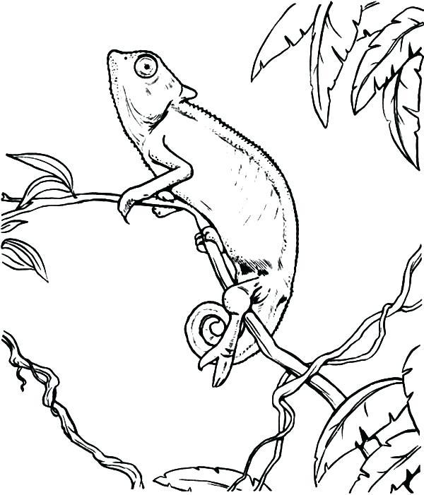 600x701 Chameleon Coloring Chameleon Coloring Pages For Kids Chameleon