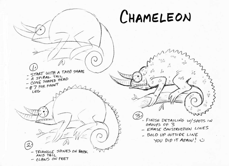 Chameleon Outline Drawing