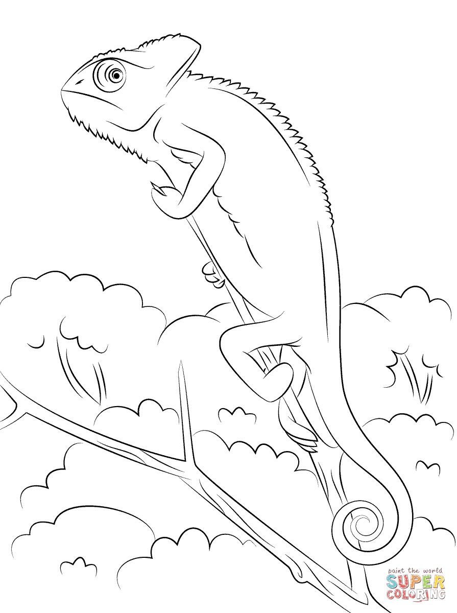 895x1200 Chameleon Coloring Pages Free Coloring Pages