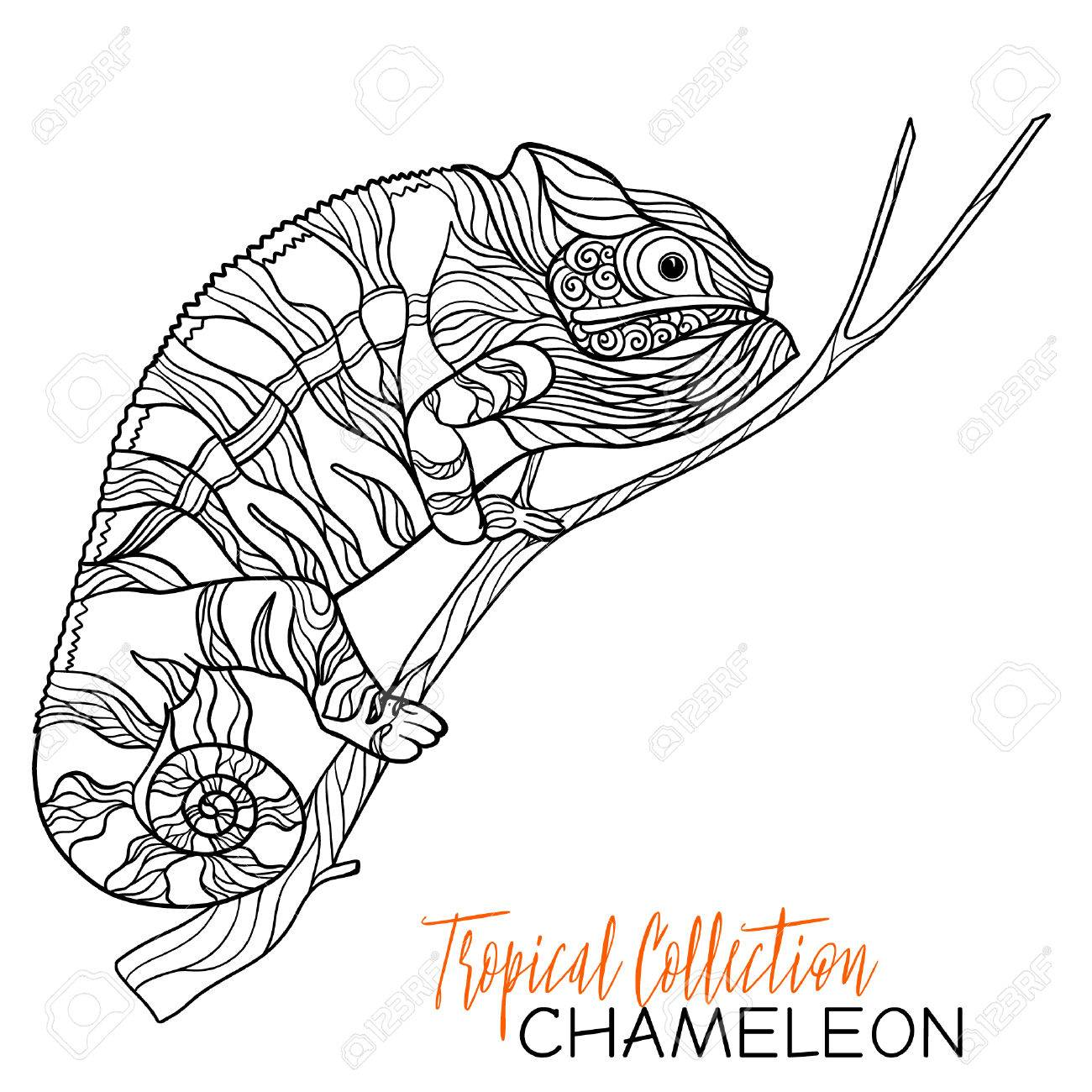 1300x1300 Chamelion. Vector Illustration. Coloring Book For Adult And Older