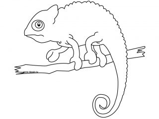 320x240 Draw Chameleon Pictures To Color 82 On Download Coloring Pages