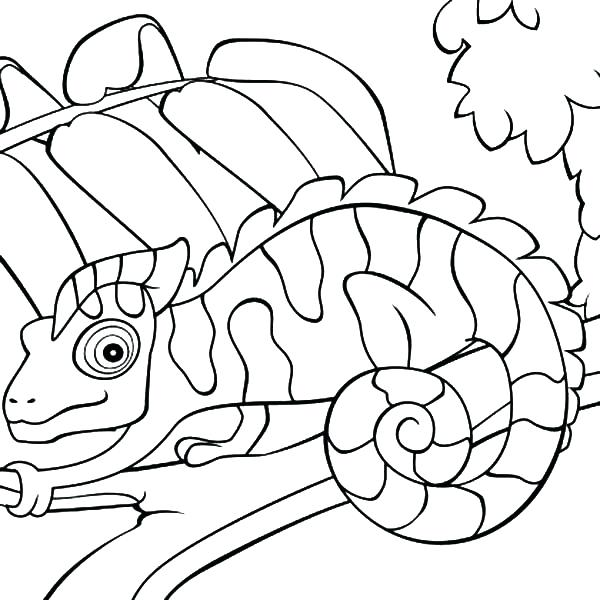 600x600 Mixed Up Chameleon Coloring Page Chameleon In Zoo Mixed Up