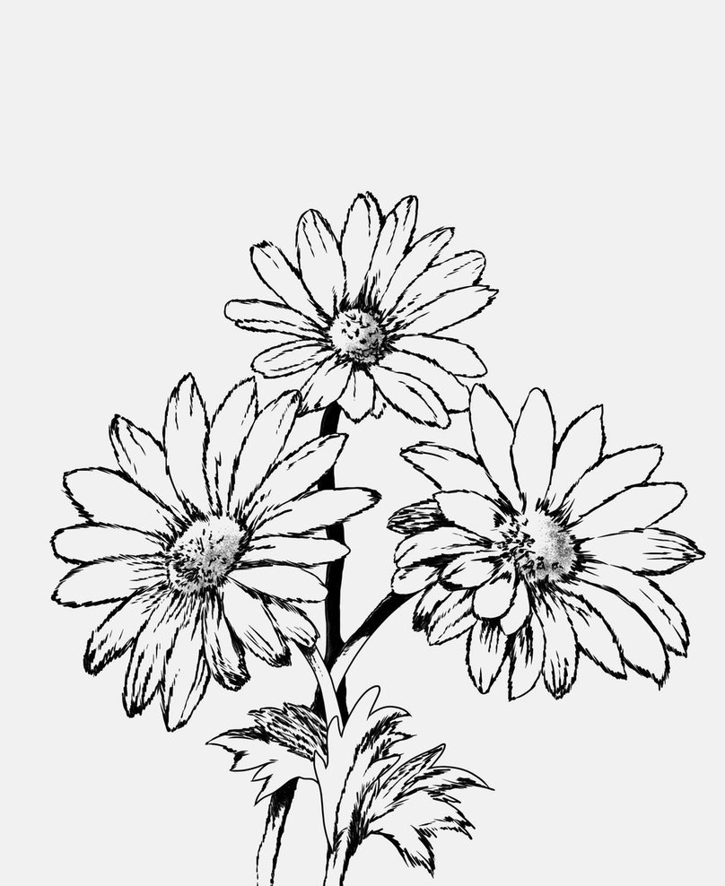 How to draw a daisy, queen of wildflowers 14