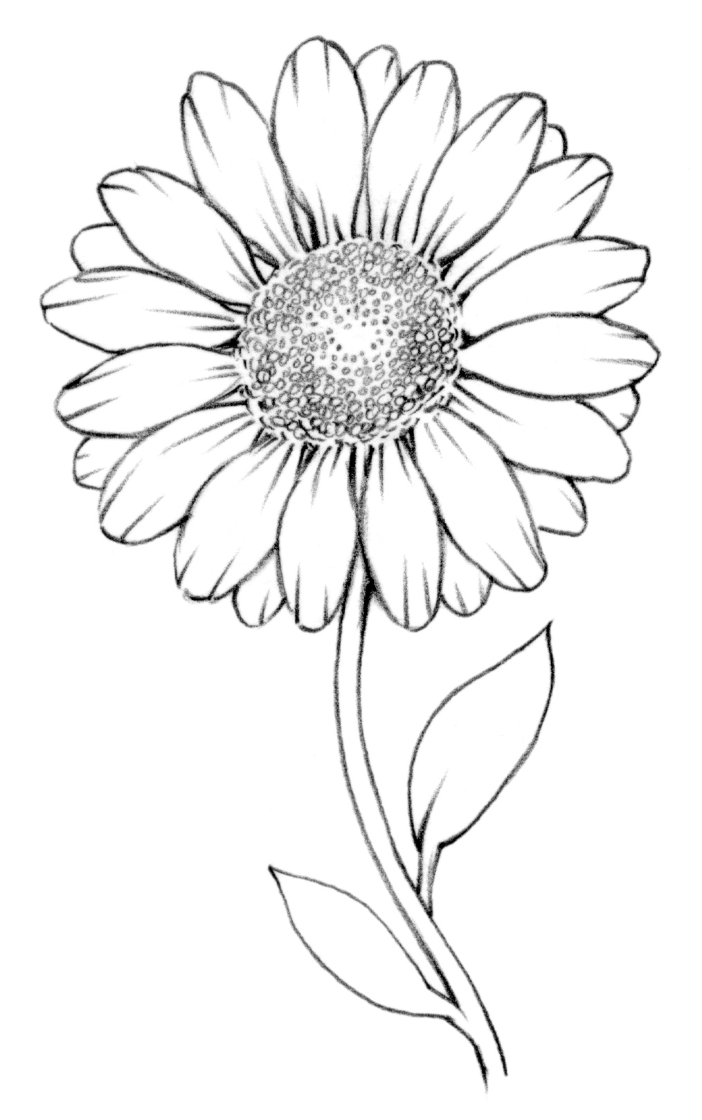 How to draw a daisy, queen of wildflowers 11