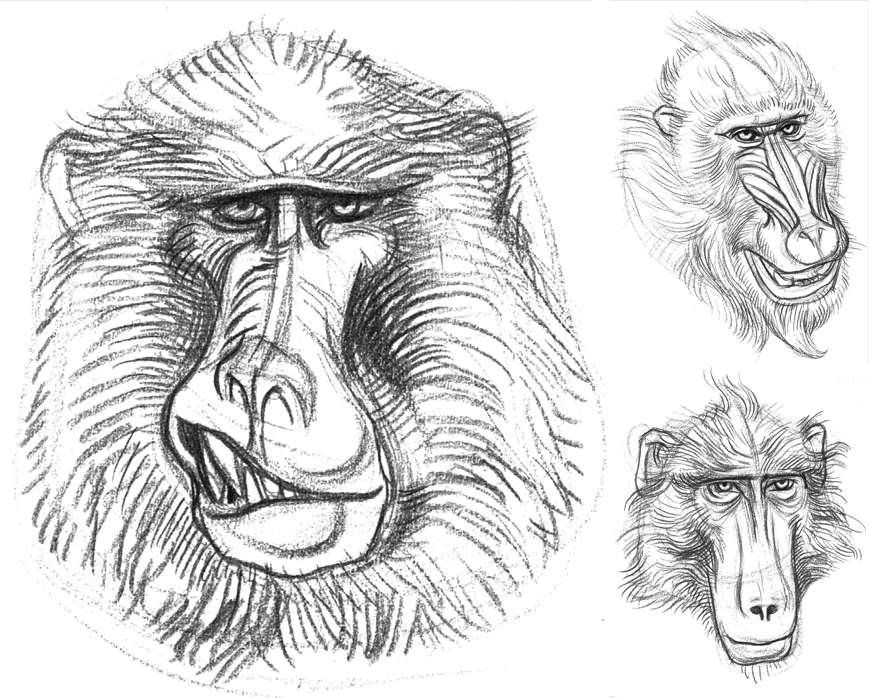 3000x2409 Garygeraths Animal Drawing