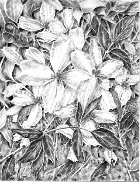 450x582 43 Best Botanical Art Images On Botanical Art