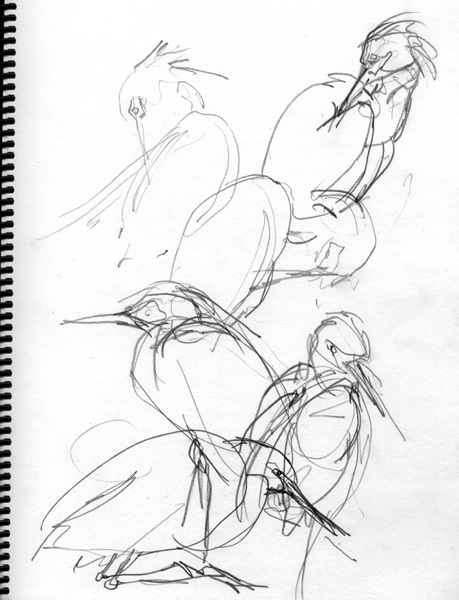 459x600 5 Steps To Better Bird Drawing 2d Design, Drawings And 2d