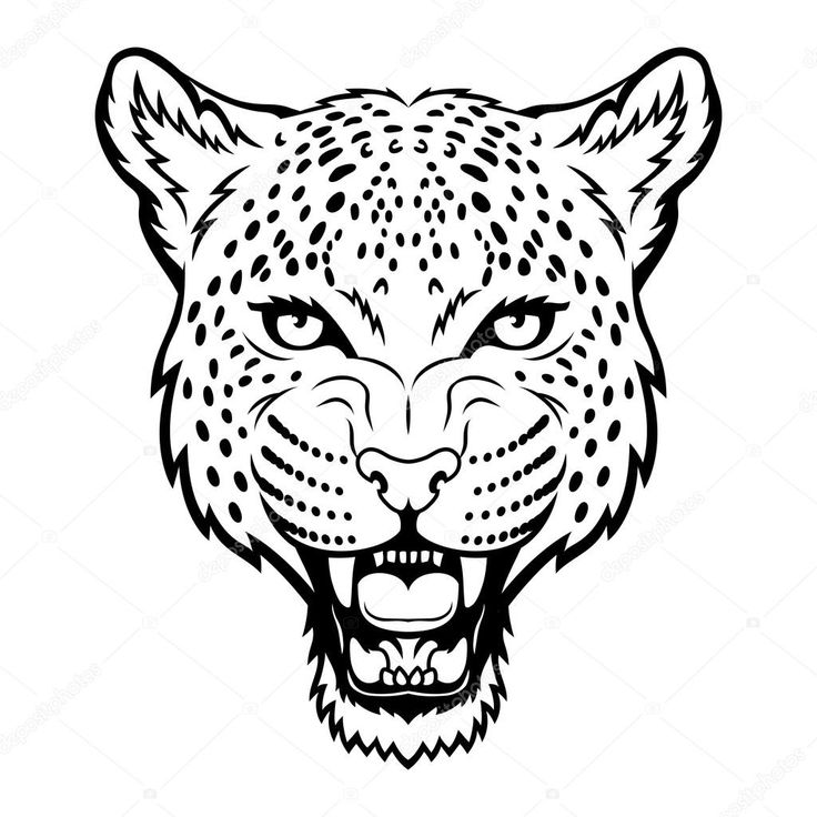 Cheetah Cartoon Drawing