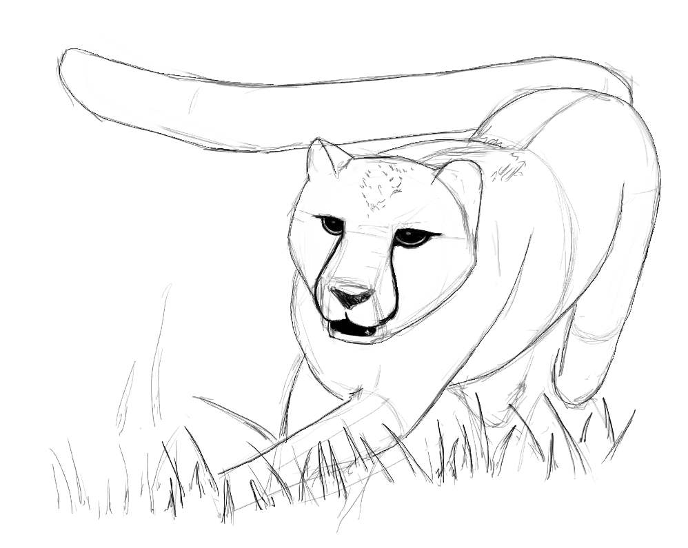 The best free Cheetah drawing images. Download from 877 ...