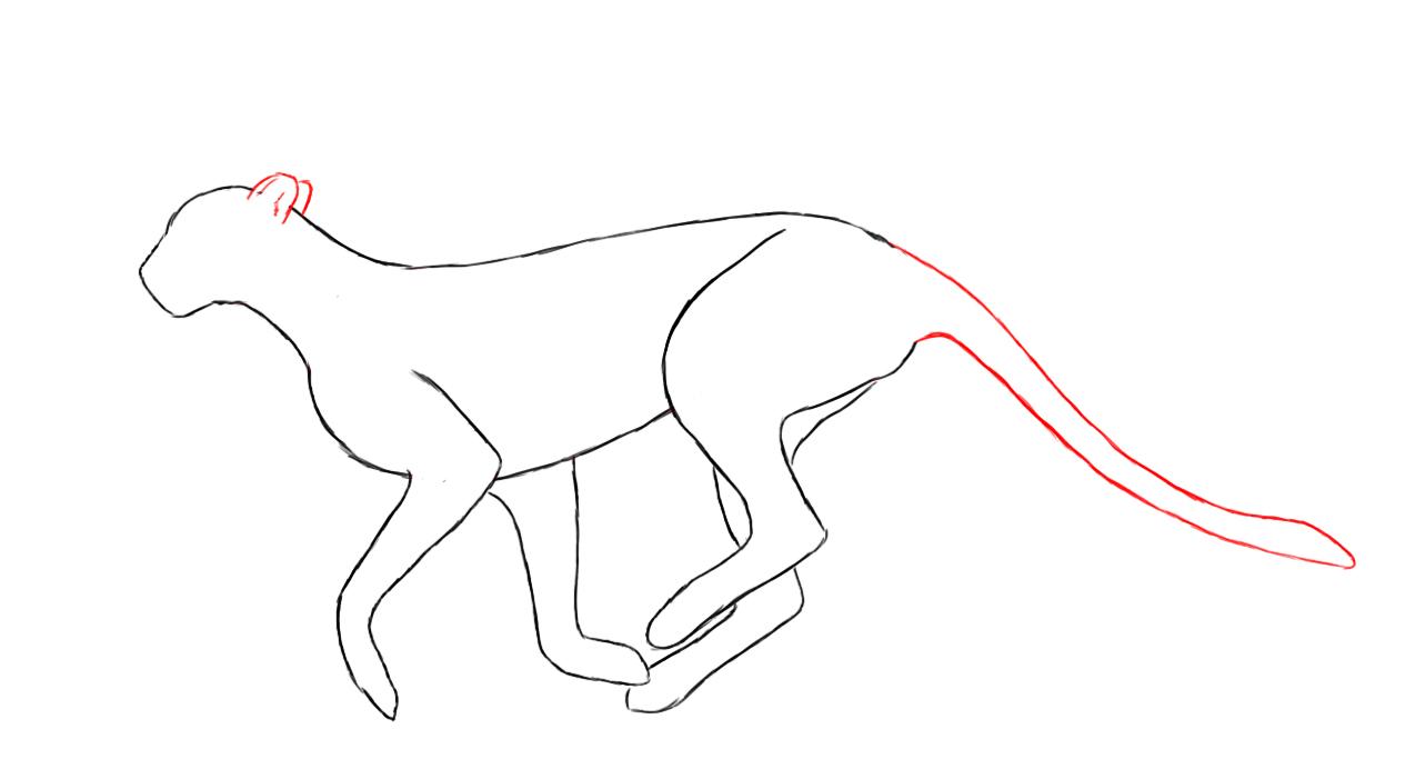 Cheetah Drawing Step By Step