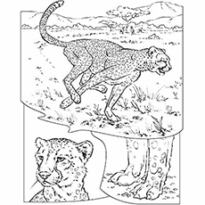 230x230 25 Best Cheetah Coloring Pages For Your Little Ones