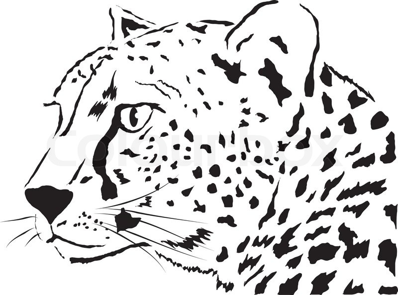 Cheetah Outline Drawing