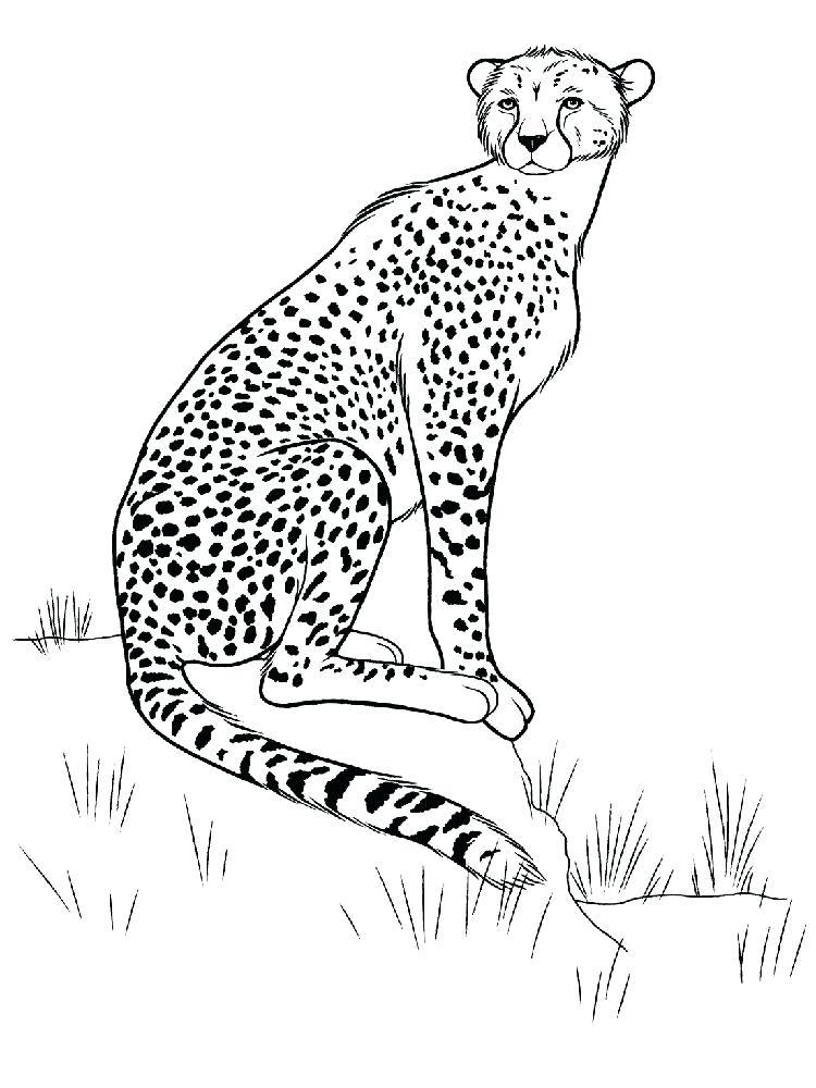 Cheetah Running Drawing at GetDrawings.com | Free for personal use ...