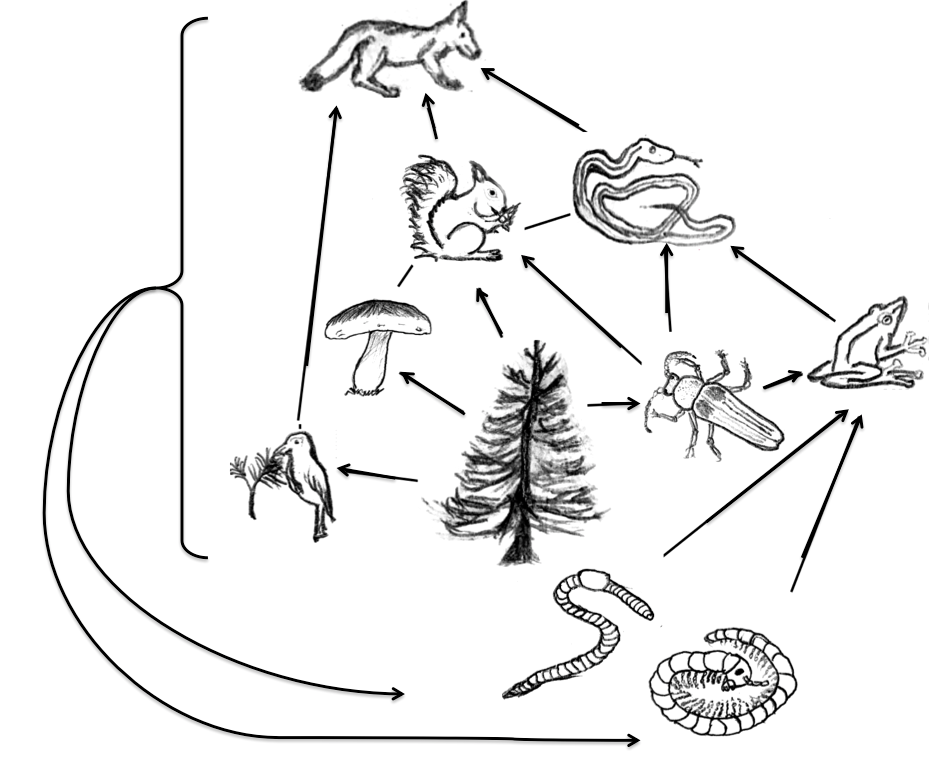 929x761 Ecosystems And Biogeochemical Cycling Biology 1511 Biological