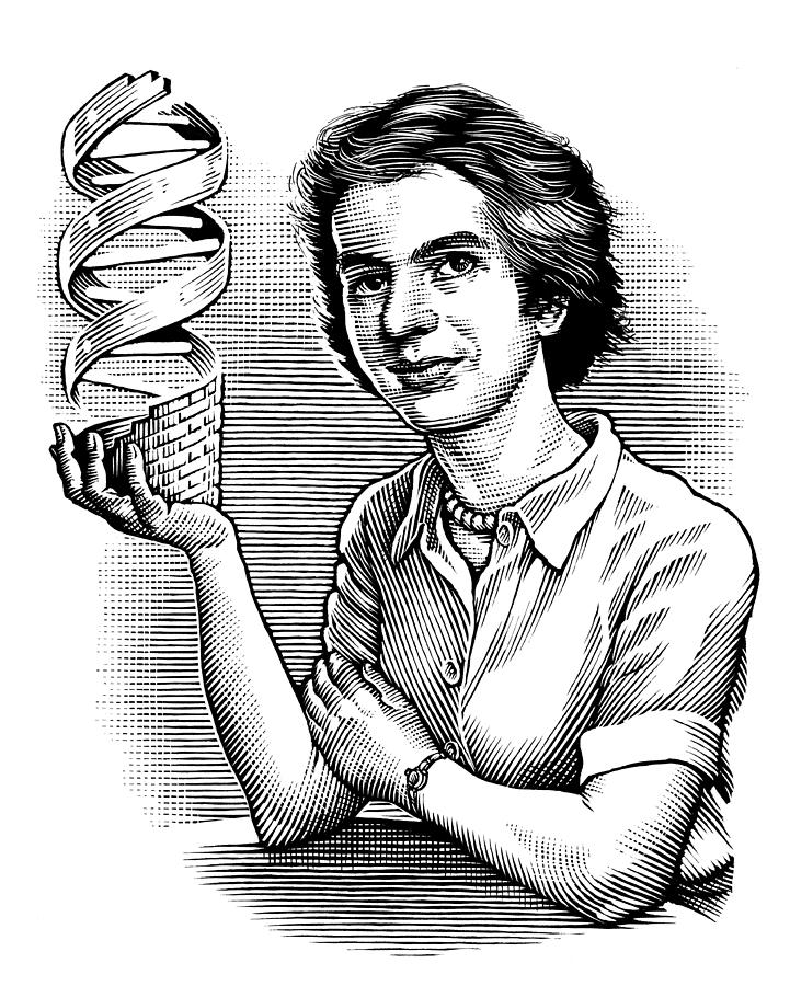 721x900 Rosalind Franklin, British Chemist Photograph By Bill Sanderson