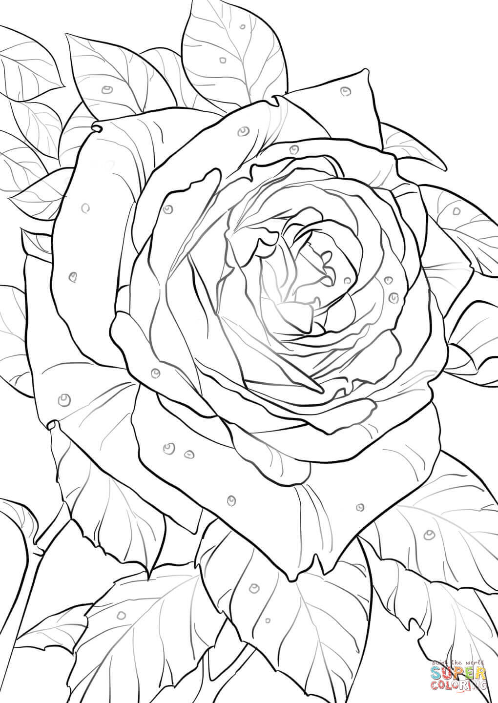 Cherokee Rose Drawing at GetDrawings.com   Free for personal use ...