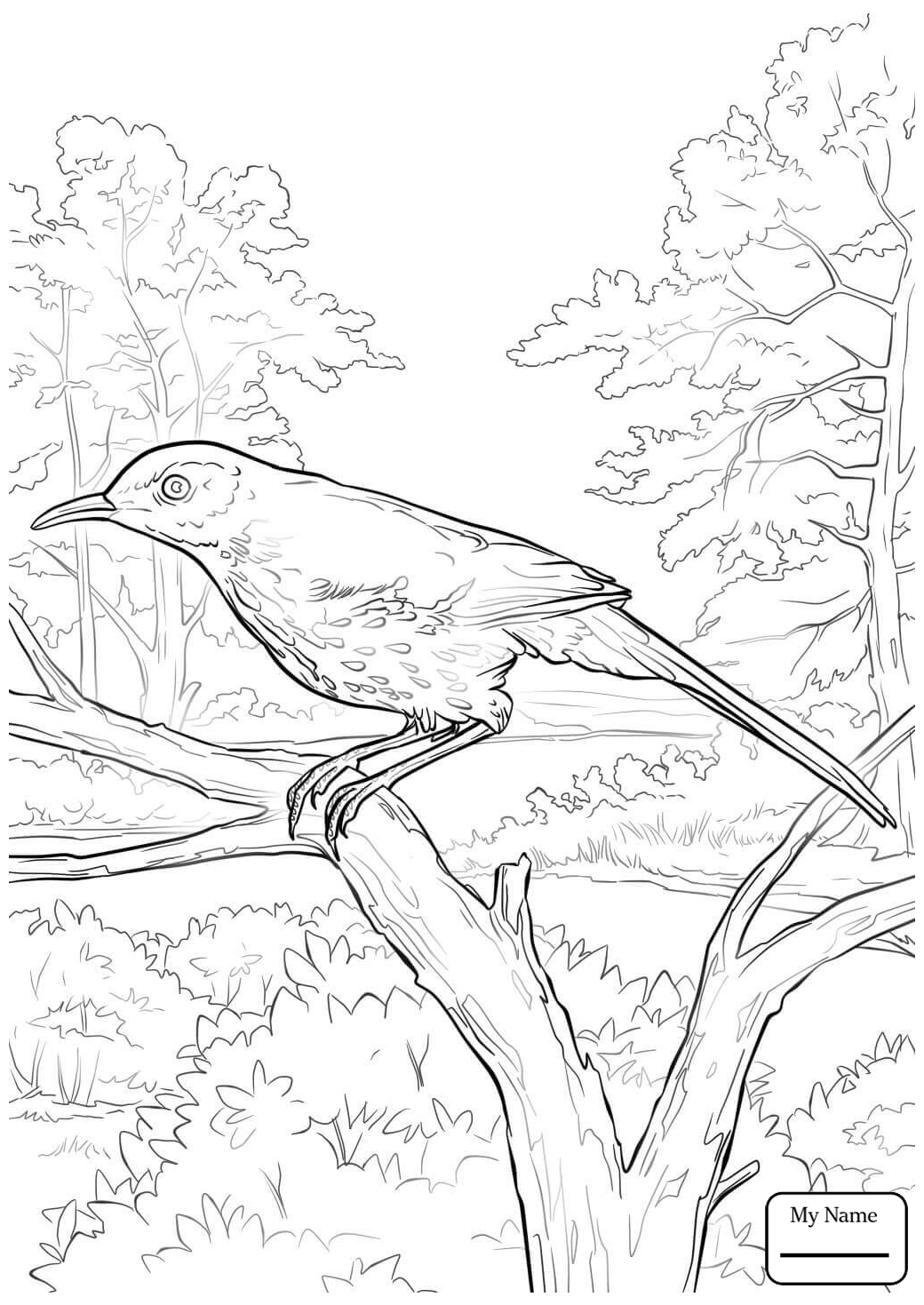 1040x1469 Coloring Pages Brown Thrasher Brown Thrasher And Cherokee Rose