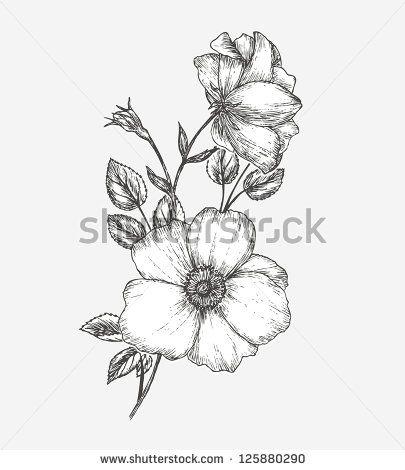 405x470 Drawings Of Wild Rose Wild Rose Flower Drawing Wild Rose