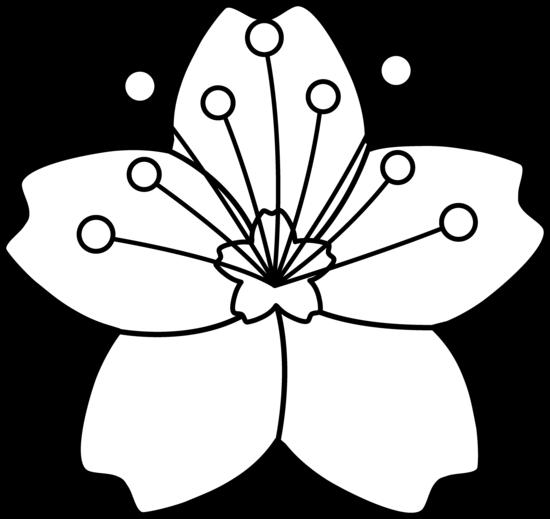 550x519 Cherry Blossom Line Art