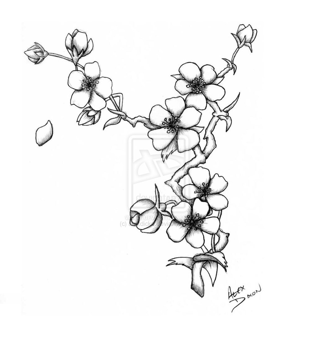 1024x1149 Cherry Japanese Blossom Drawing