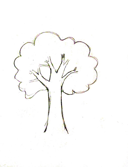 507x660 How To Draw A Tree