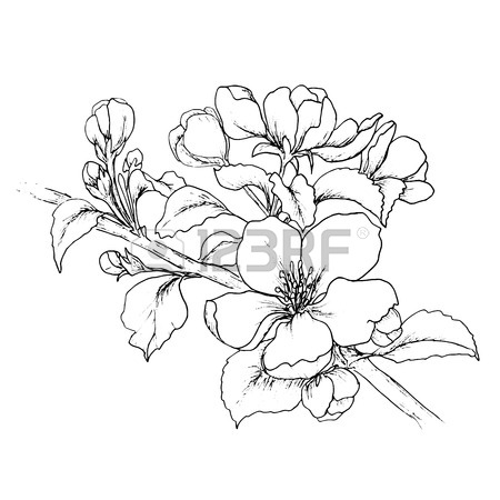 450x450 Plum Flower Outline Stock Photos. Royalty Free Business Images