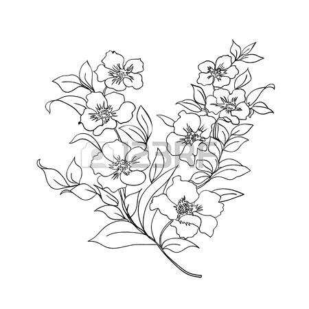 450x450 Twig Sakura Blossoms. Vector Illustration. Black Outline Royalty