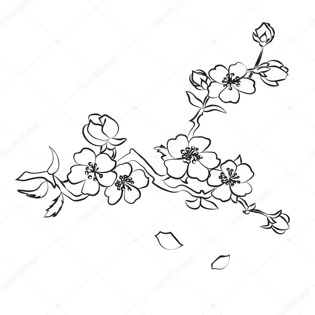 1024x1024 Twig Cherry Blossoms Stock Vector Likka