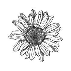 Cherry Blossom Drawing Tumblr