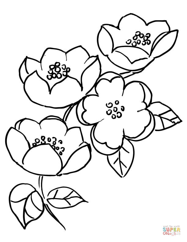 Cherry blossom flower drawing at free for Cherry blossom coloring pages