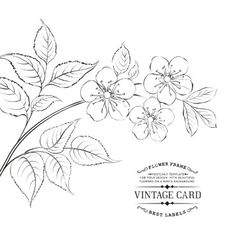 236x248 Plum Blossoms Line Drawing Plants And Flowers Vector Coloring